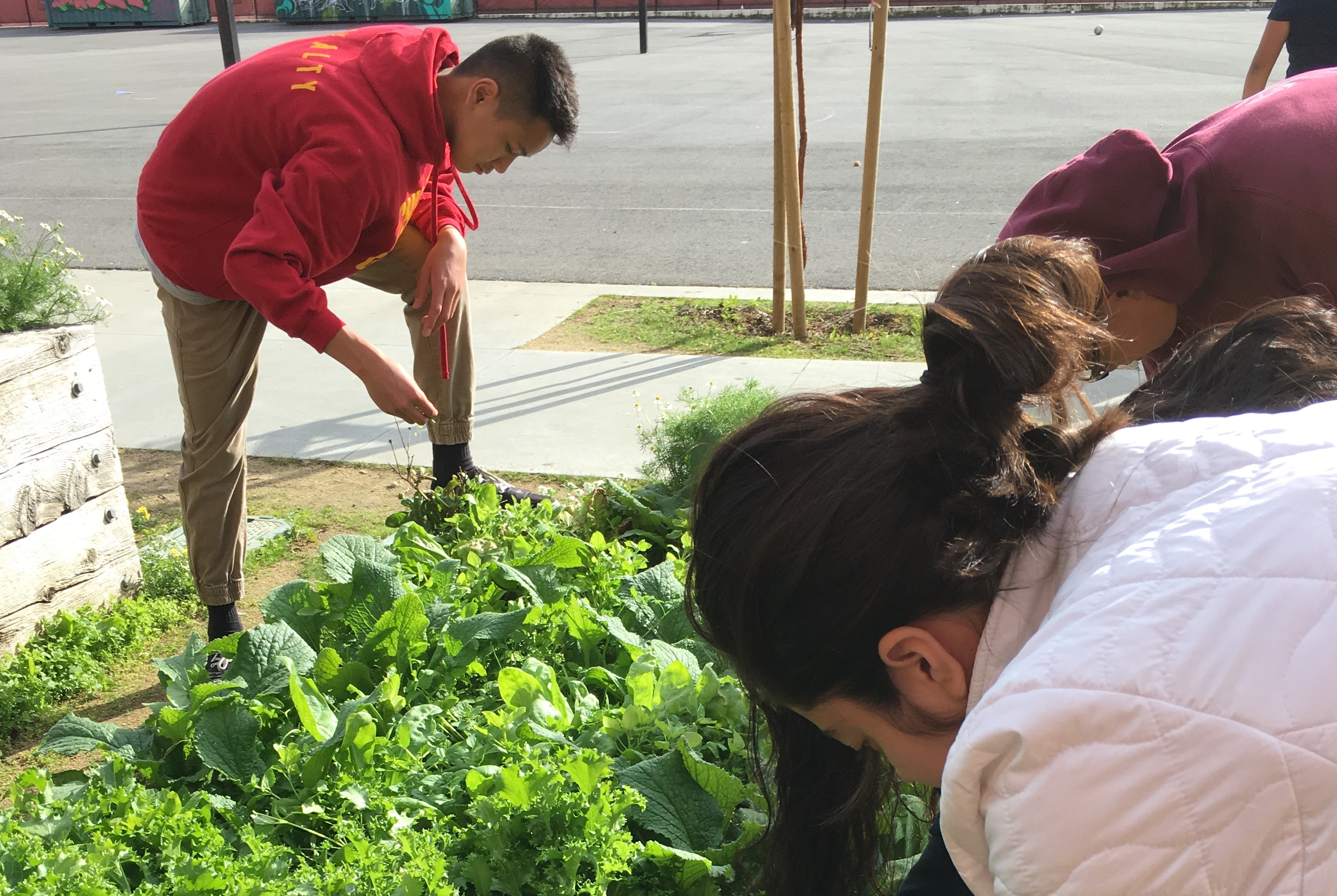 Green Academy Students tending to the school garden.