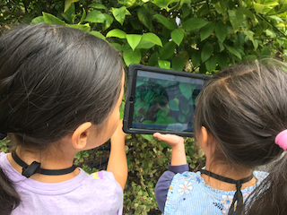 Two students look into an iPad and take a picture of a plant. They are using the program Seesaw in the school learning garden.