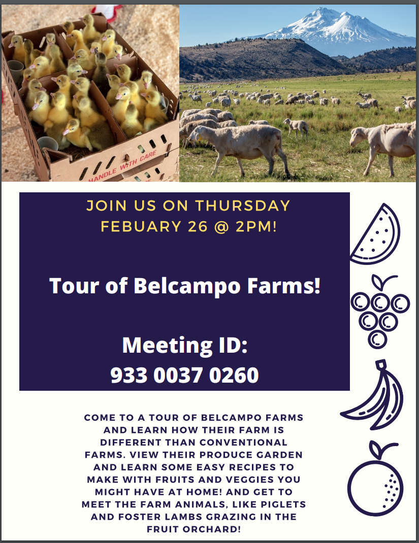 picture of sheep and chicks with more information about a field trip to Belcampo farms