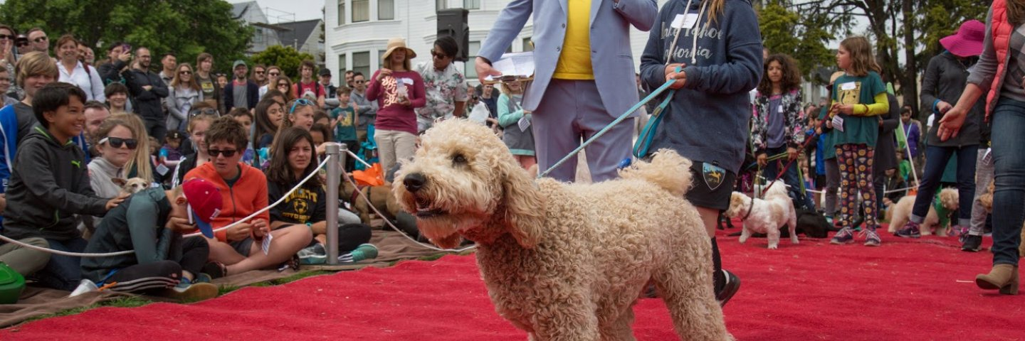 Dog walking on red carpet at Dog Show in Duboce Park