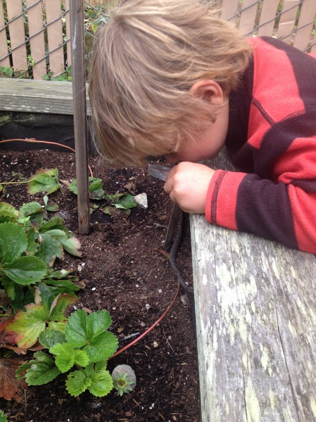 Boy looking at plants with a magnifying glass